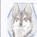 愛犬の似顔絵お描きします